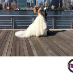 مدل لباس عروس 11 - mashhadwomen